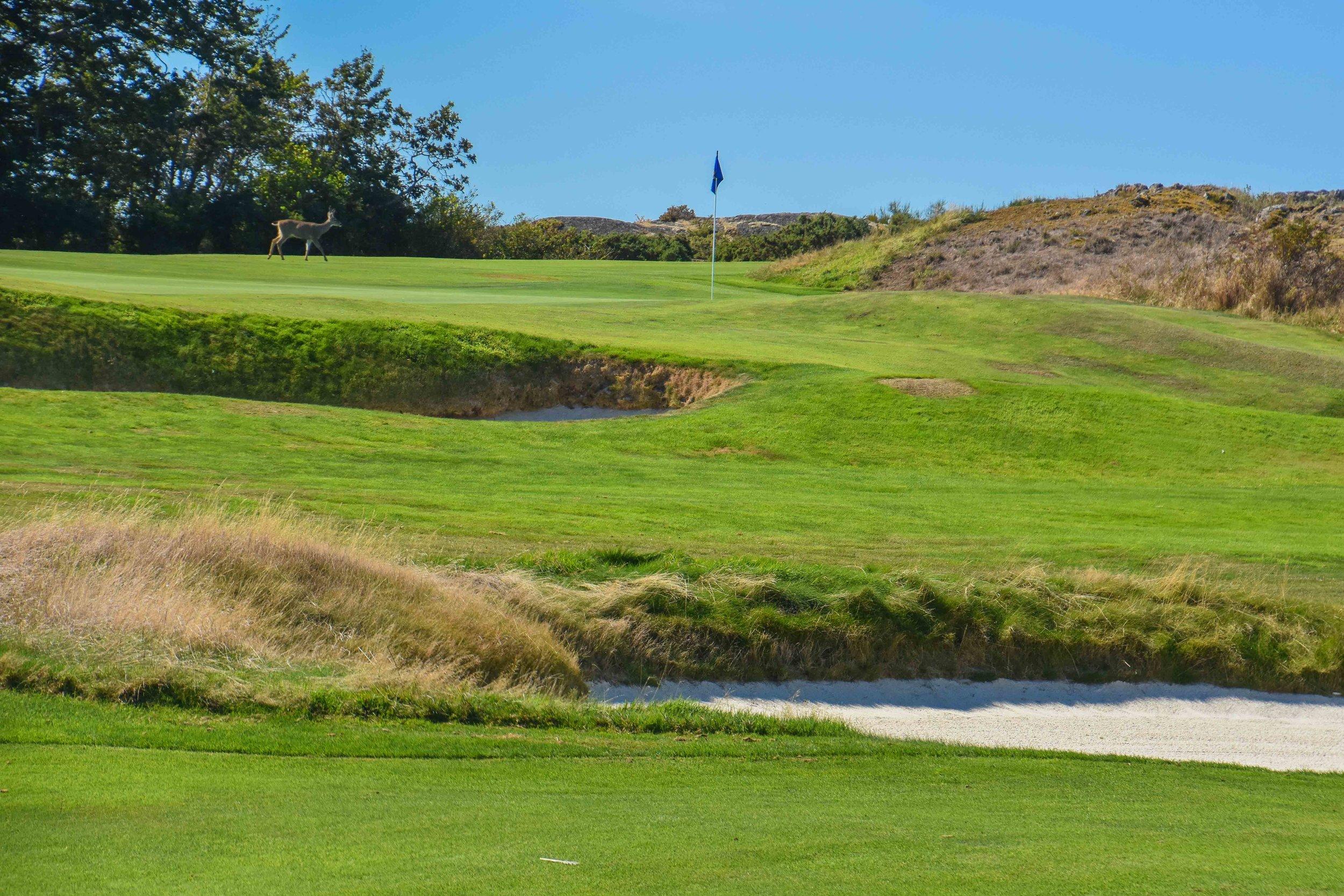Victoria Golf Club1-52.jpg