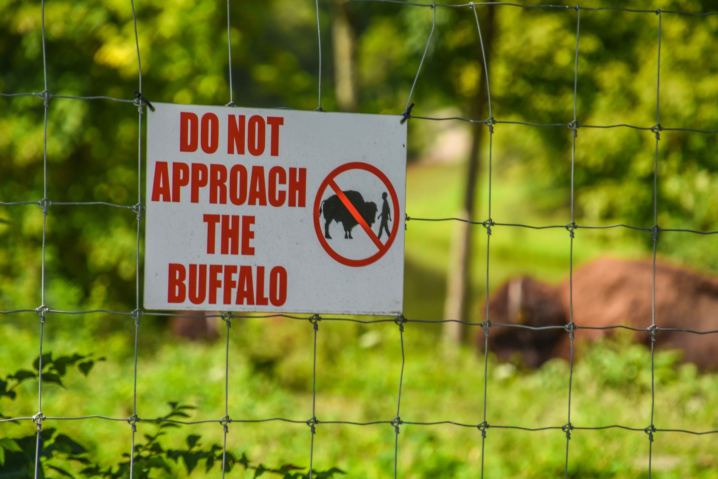 Between the 1st and 10th holes at Stonelick you will find a buffalo pen. Do not approach them. Approach the green instead.