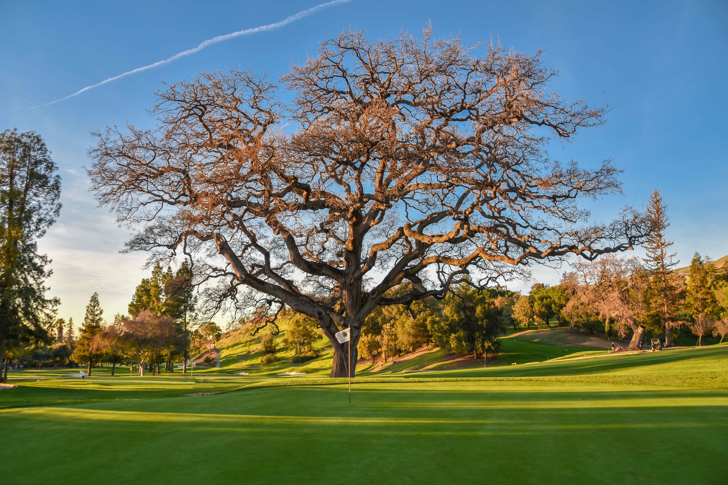 The 18th green at San Jose Country Club boasts one of the top 5 RGV Tour trees.