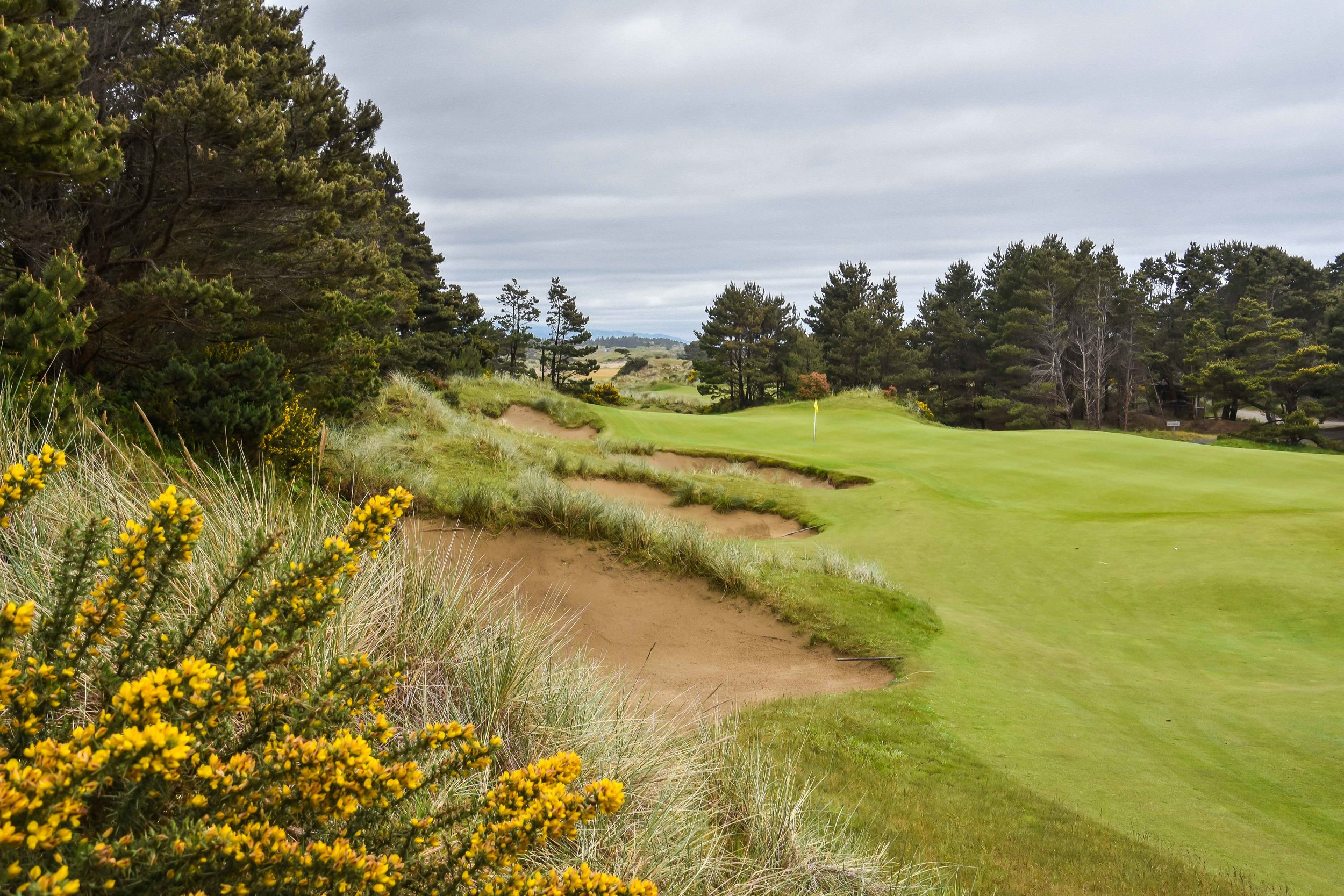 The gorse (bottom left) blooms twice a year at Bandon.