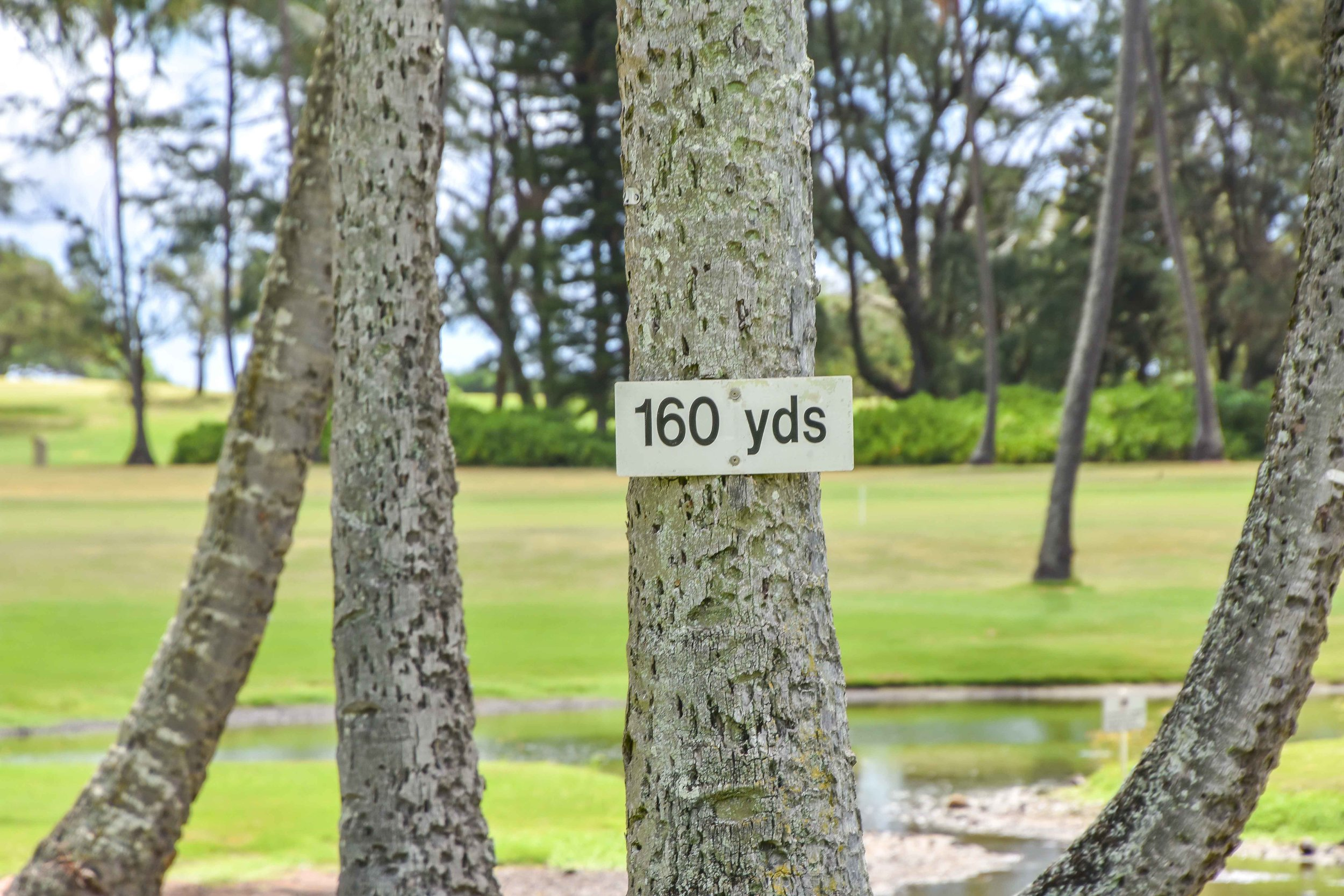 Ah yes, the 160 yard tree.