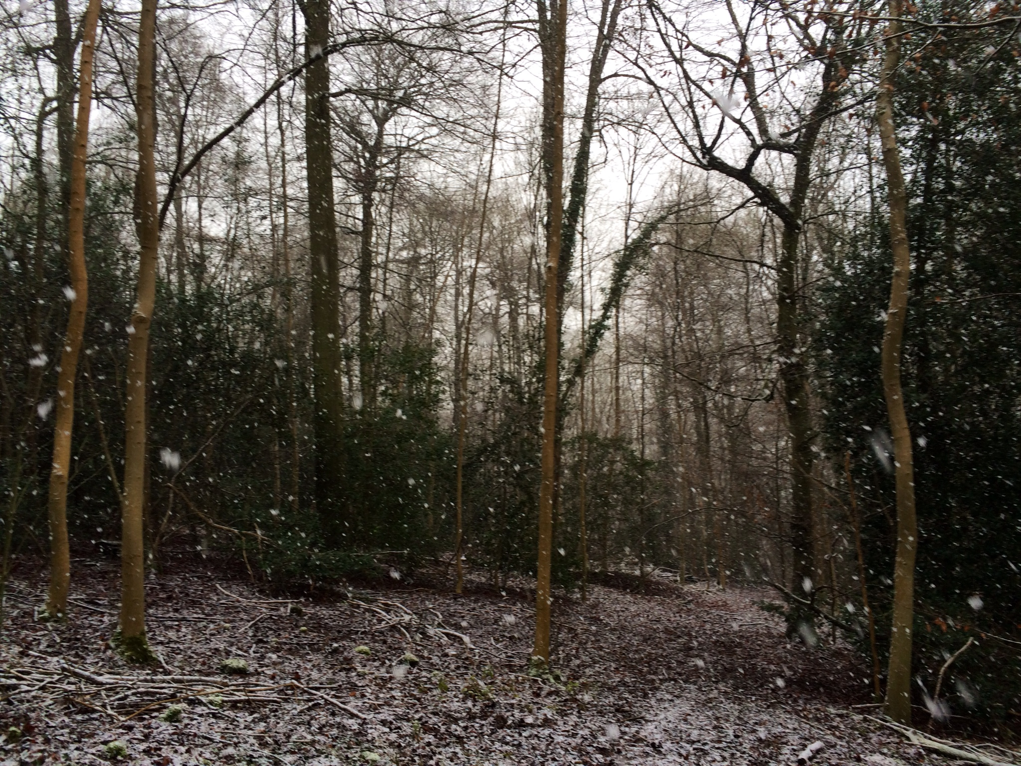 Snow-a-go-go