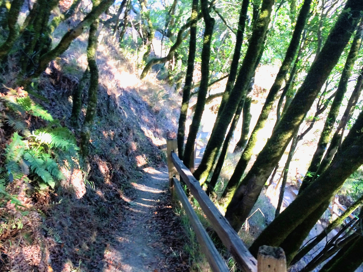 The Dipsea Trail, California