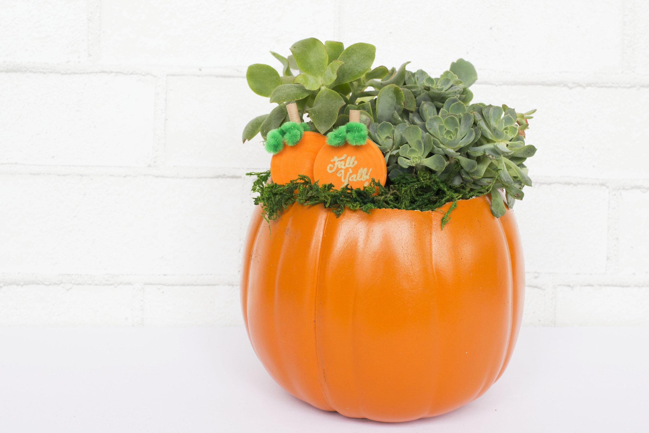 Pumpkin Planter.jpg