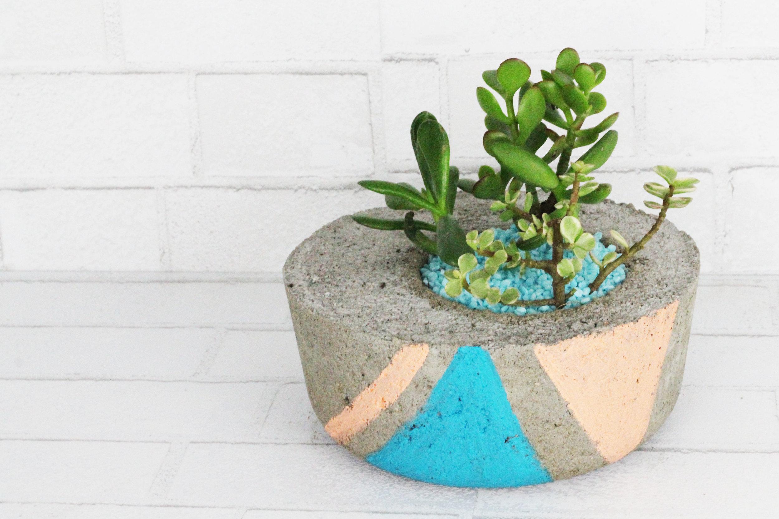 Cement Terrarium 2.jpg