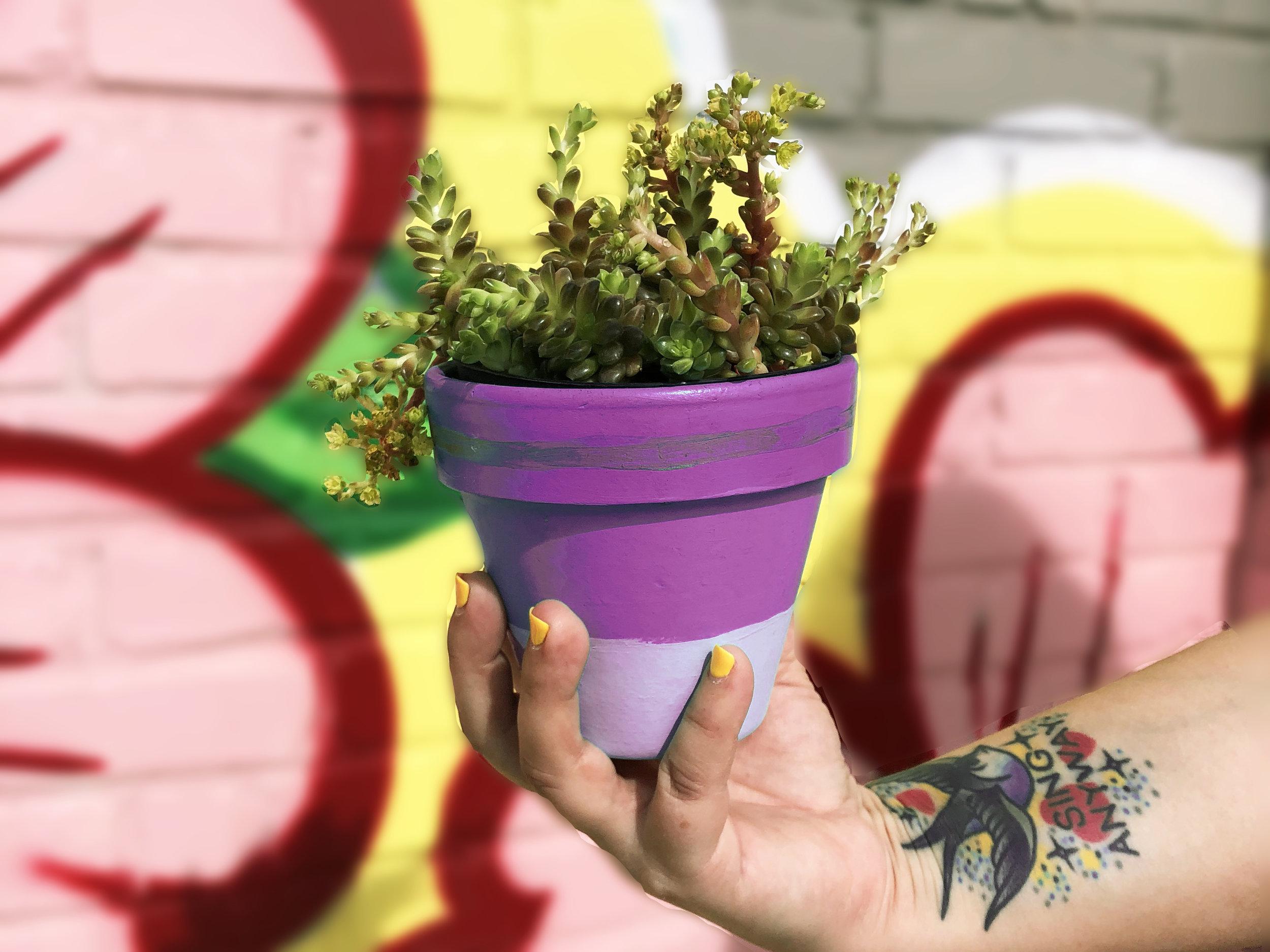 Paint & Plant Purple 4x3.jpg