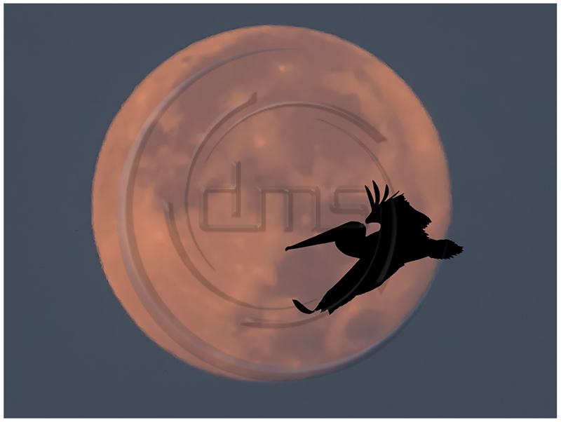 Fly Me to the Moon.jpg