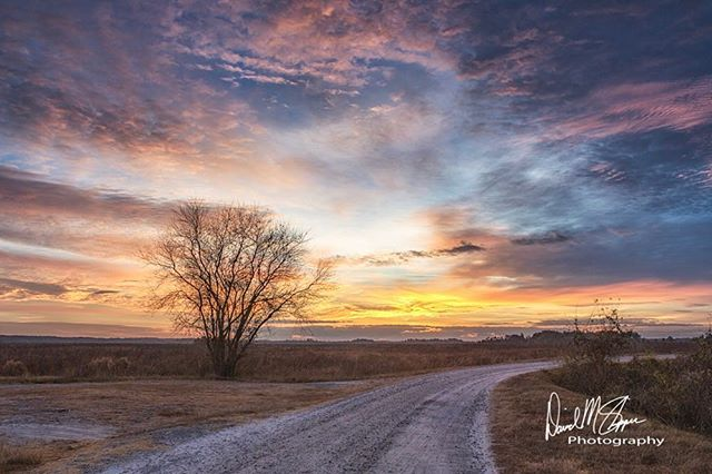 Throwback Thursday to a beautiful winter sunrise 🌅 at Savannah National Wildlife Refuge. #tbt . . . . . #cold #winter #wildlife #wildliferefuge #sunrise #canonphotography #colors #amazing #instagram #lonely #road #clouds #day #landscape #instagood #natgeocreative #photography #cool #lowcountry #photooftheday #instadaily #blue #earthpix #adventure #travel #amazing_shots