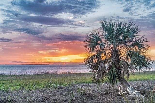 Your Saturday morning, Saint Patrick's Day weekend sunrise 🌅 from Skidaway Island. ☘️ #sony #sonya7iii #saintpatricksday #weekend