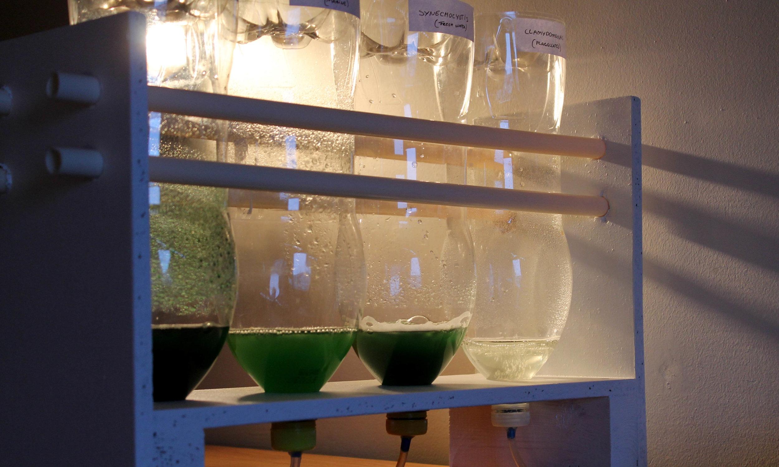 The Big Algal Open Experiment