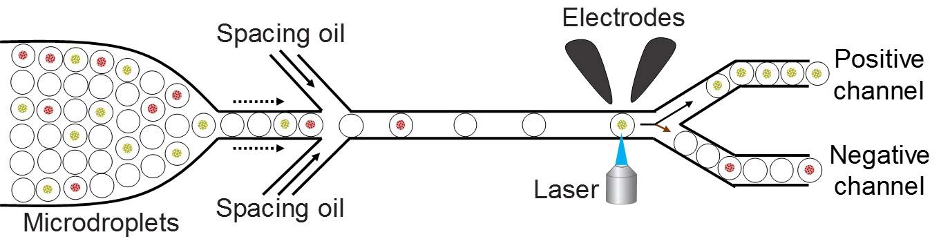 A schematic of the droplet based microfluidics setup