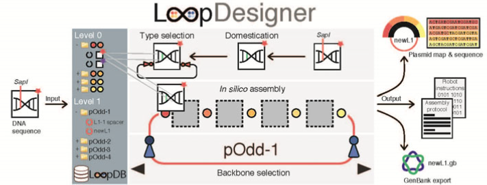 LoopDesigner.png