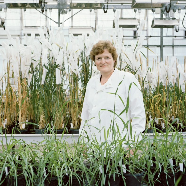 Wendy Harwood - Professor, Dept. of Crop Genetics, John Innes Centre