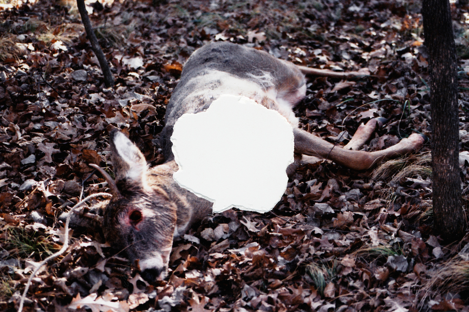 Untitled (Deer), 2006