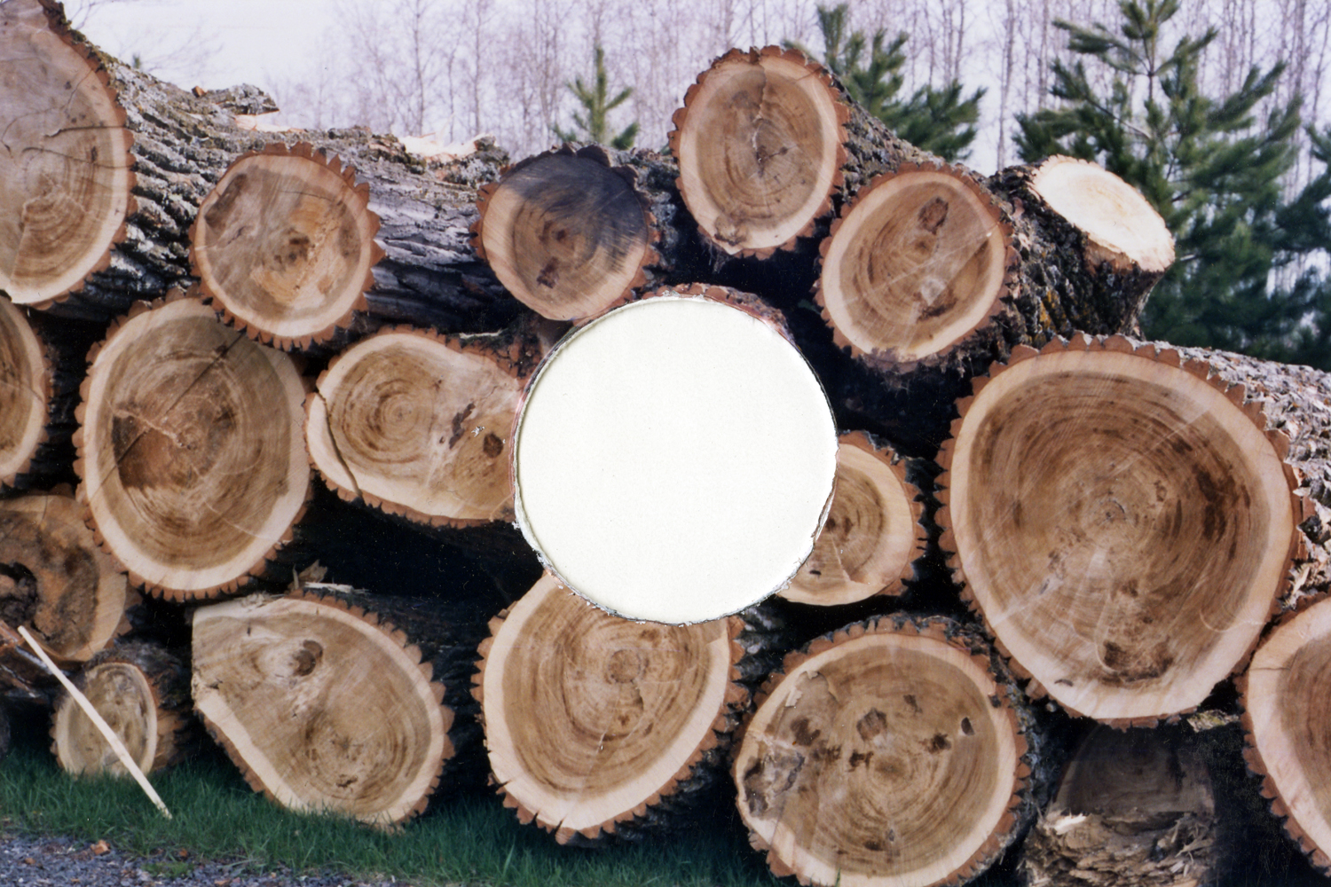 Untitled (Logs), 2006