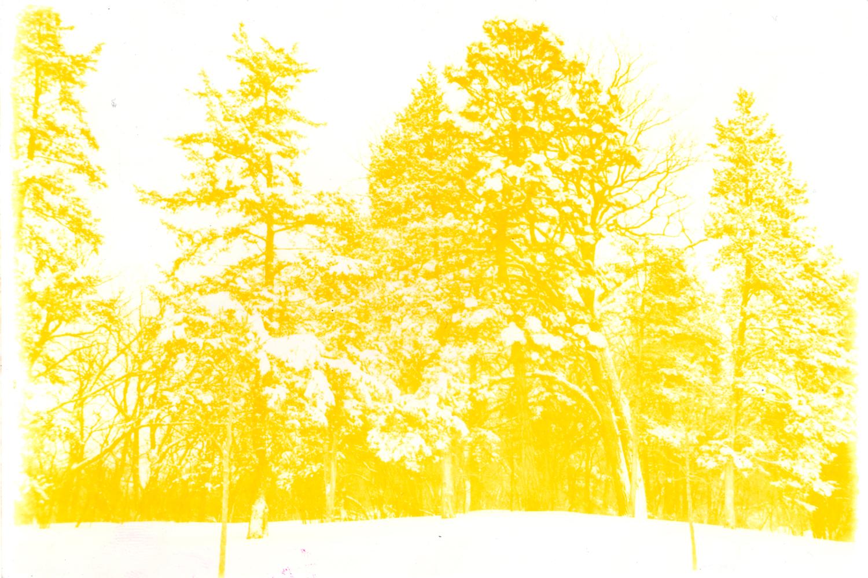Sunburn 36, 2006