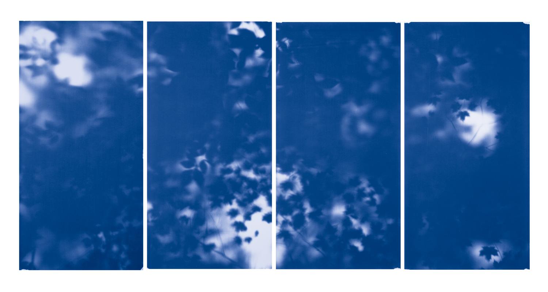 Blue Line of Woods #337, 2012