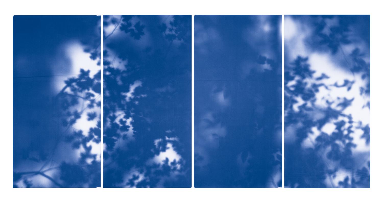 Blue Line of Woods #527, 2012