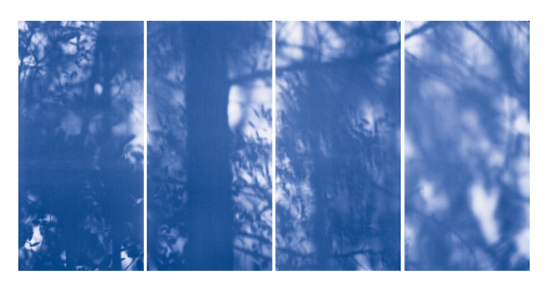 Blue Line of Woods #1138, 2012