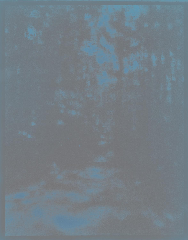 "Woods (fading), 10"" x 8"", 2011"