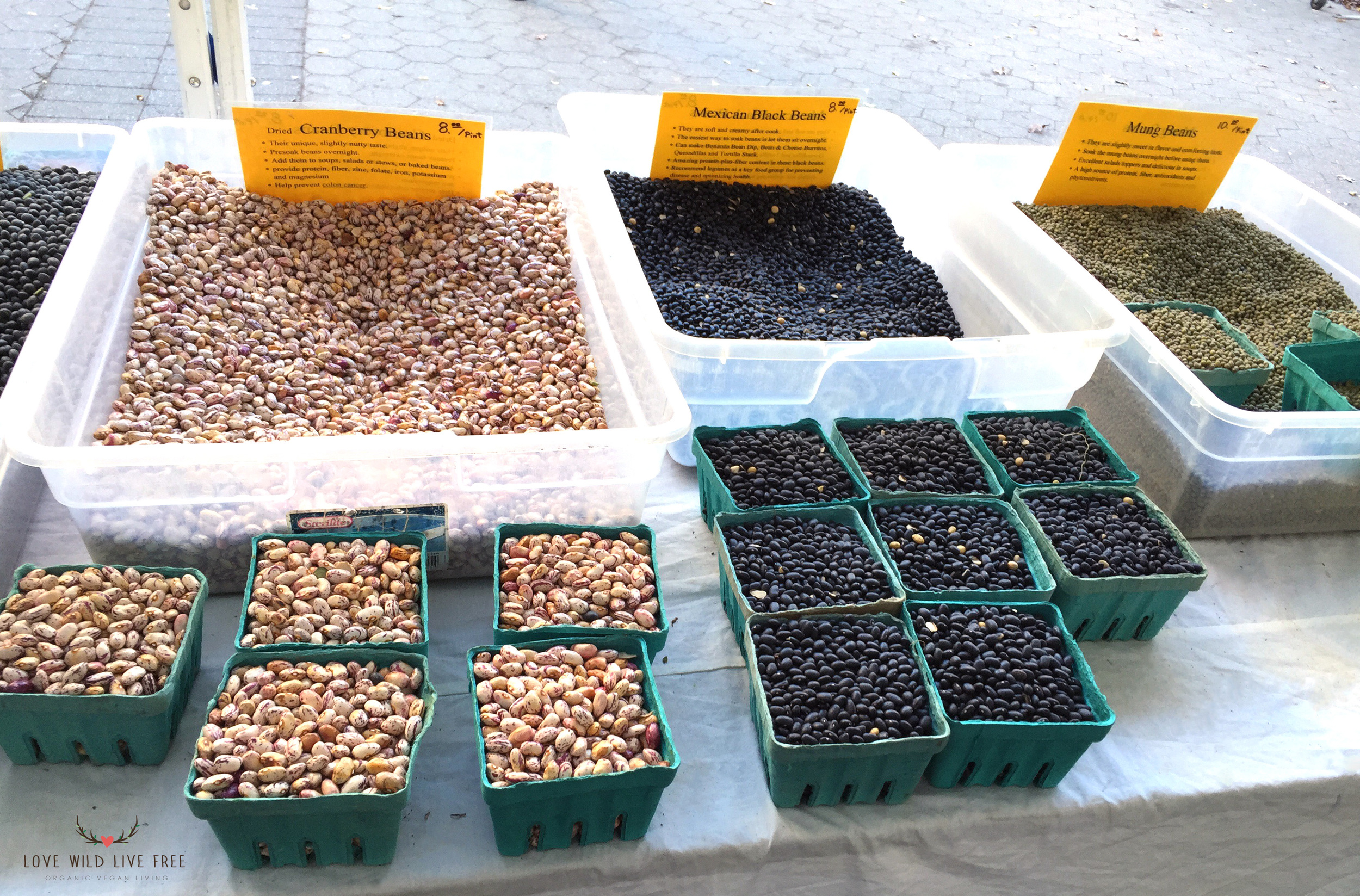 Organic cranberry beans, Mexican black beans and mung beans from Lani's Farm at GrowNYC's Greenmarket in Union Square.  Photo by Love Wild Live Free.