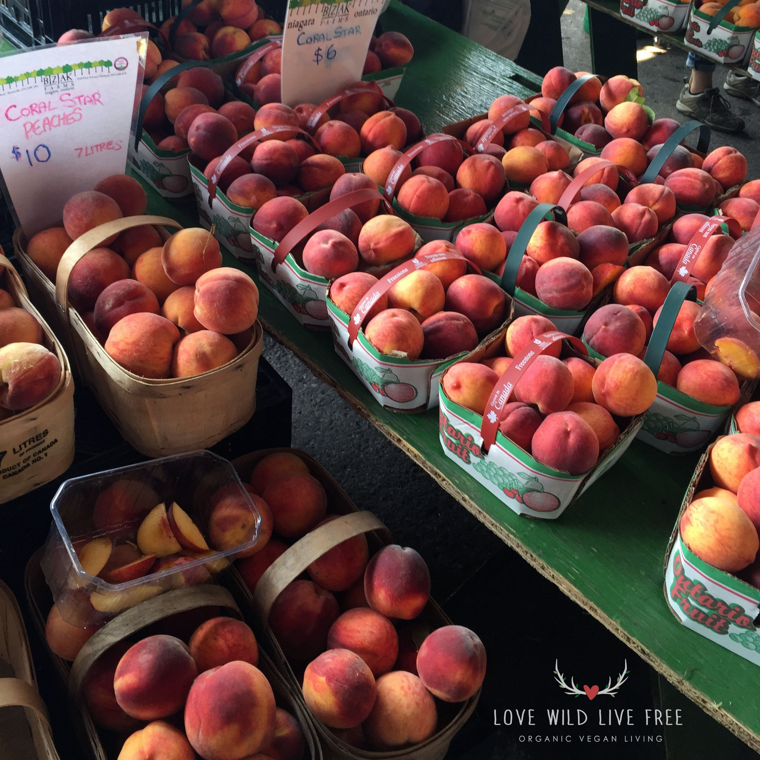 Bizjak's Coral Star Peaches at Toronto's Evergreen Brick Works.  Photo by LoveWildLiveFree.
