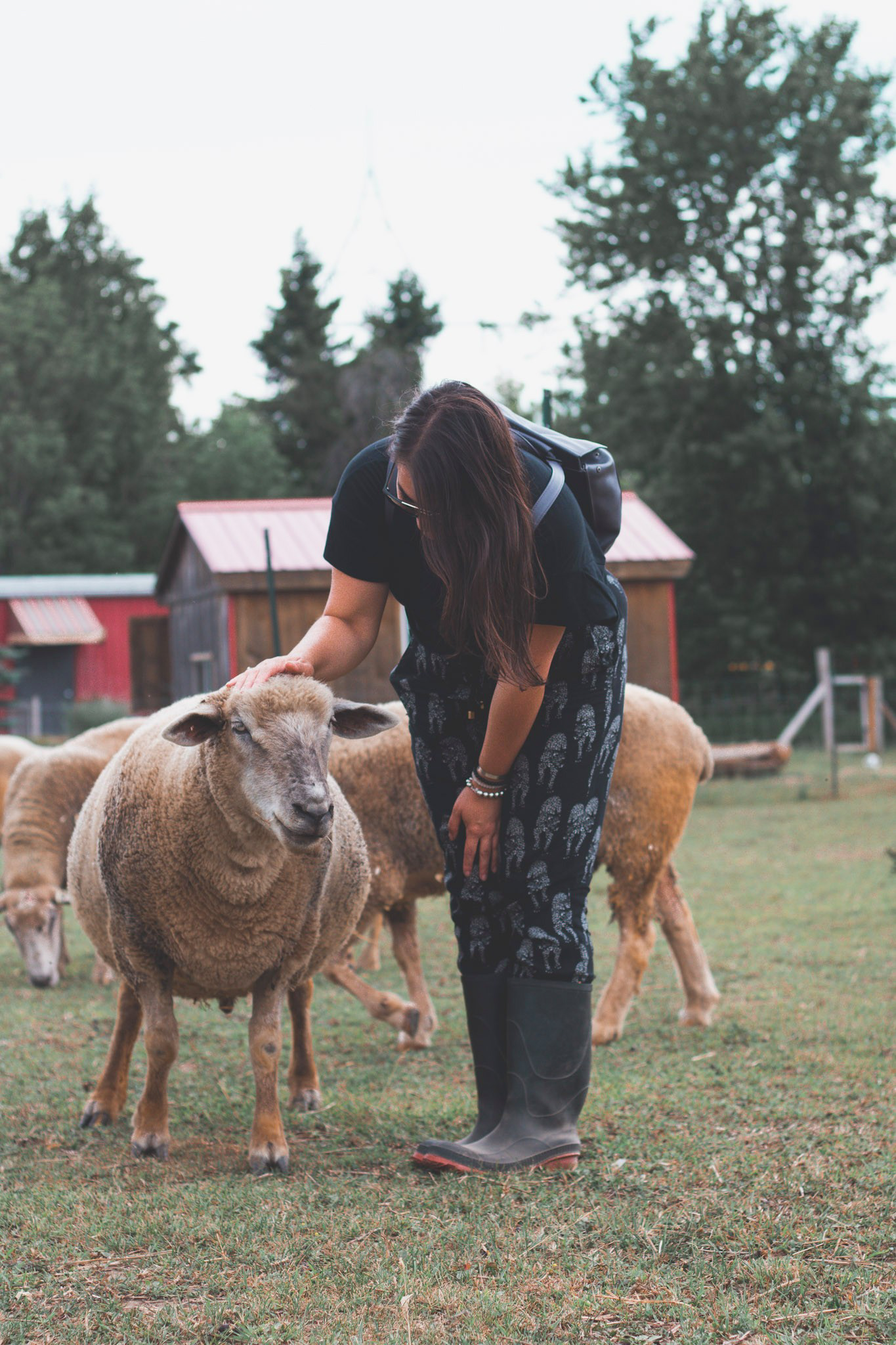 Vegan Social Events is proud to support Wishing Well Sanctuary, a Federally registered charitable organization.  Photo by    Eh Vegan   .