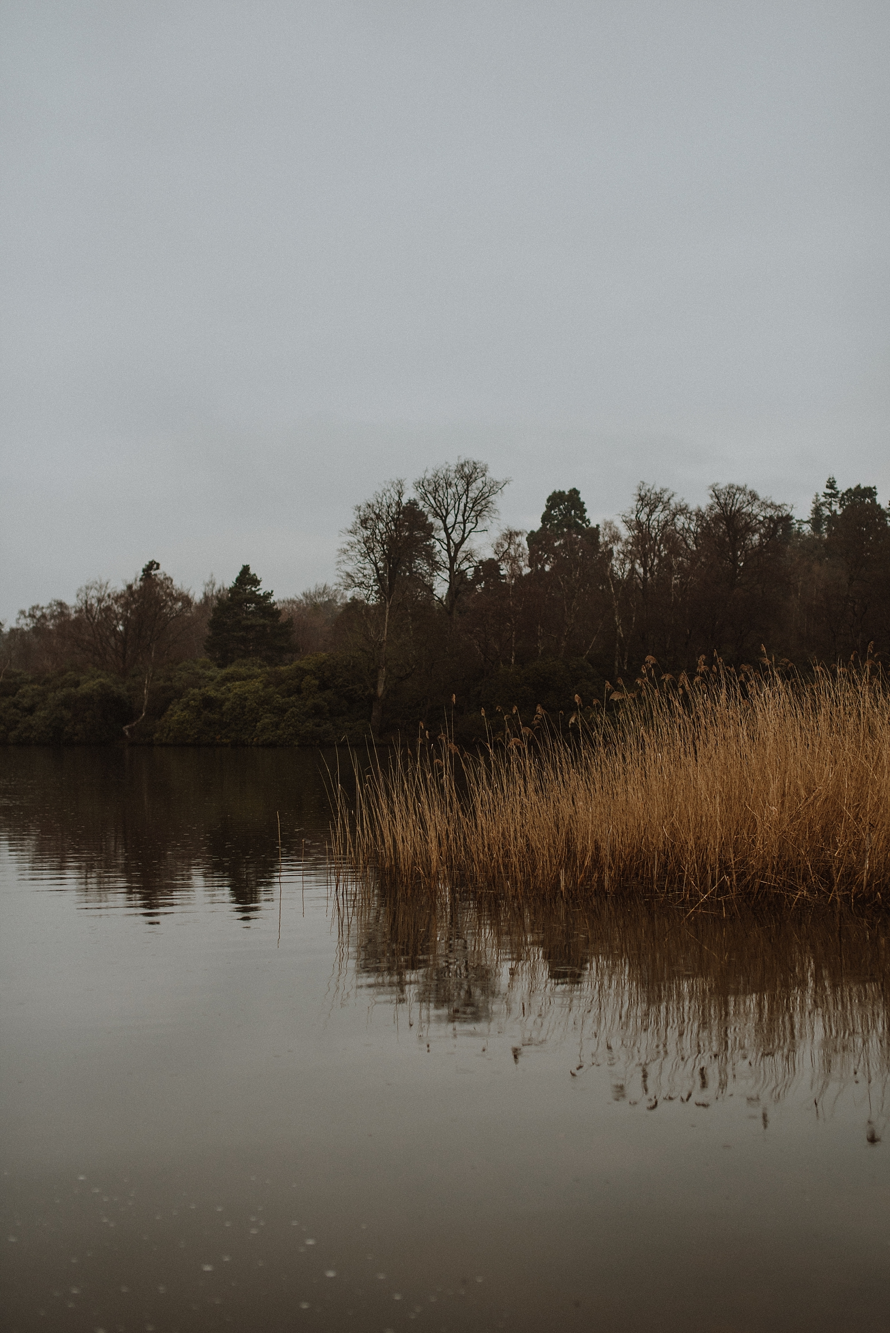 winter at windsor great park