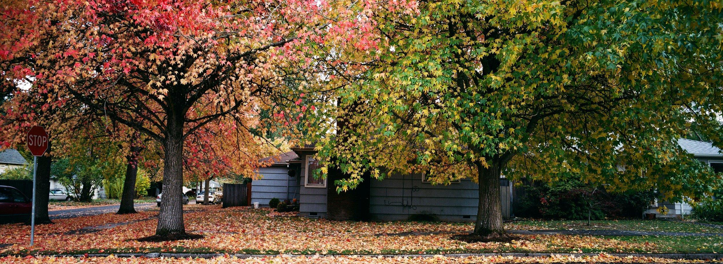 Fall colors in Portland, OR; Superia X-TRA 400