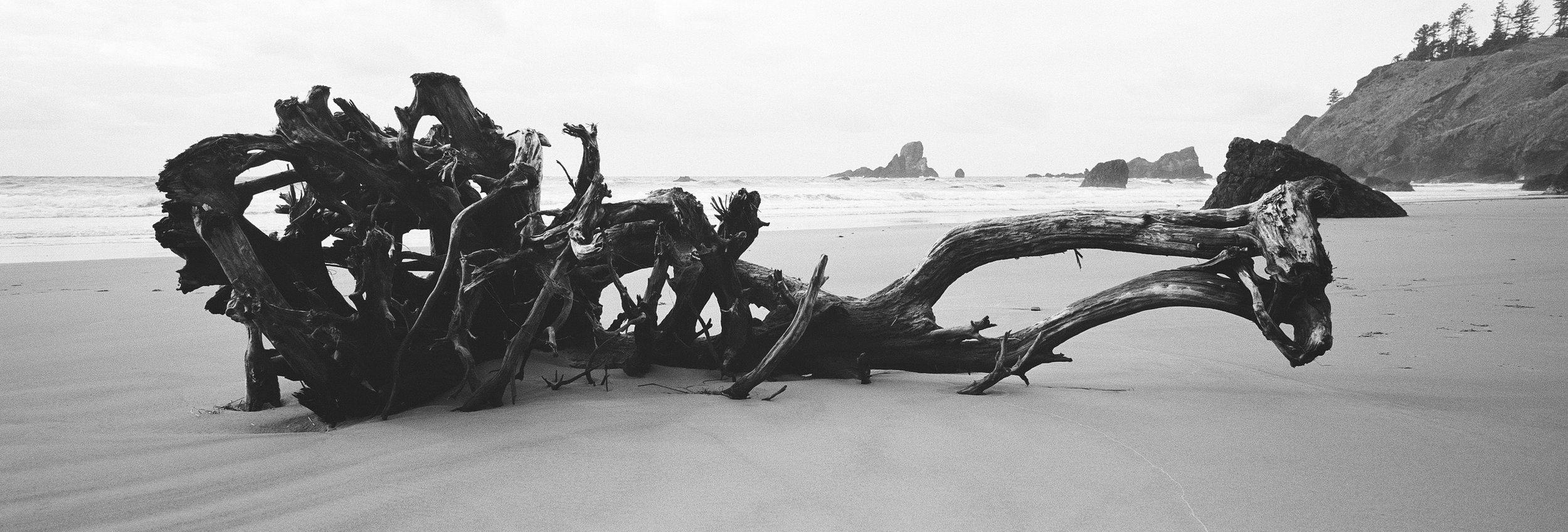 Driftwood; Kodak Tri X 400