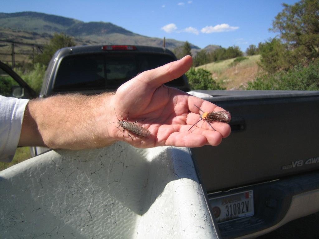 salmonflies 07 031.jpg