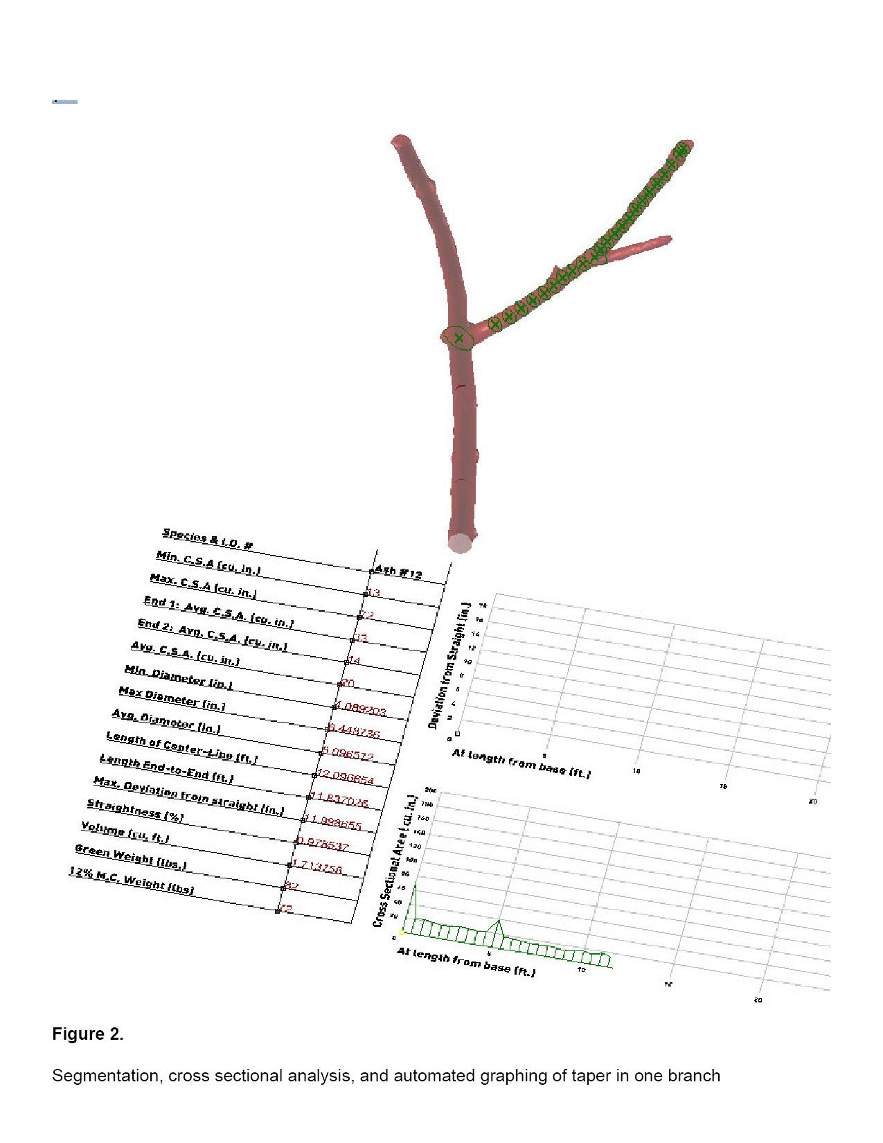Tree_12_Spec7.jpg