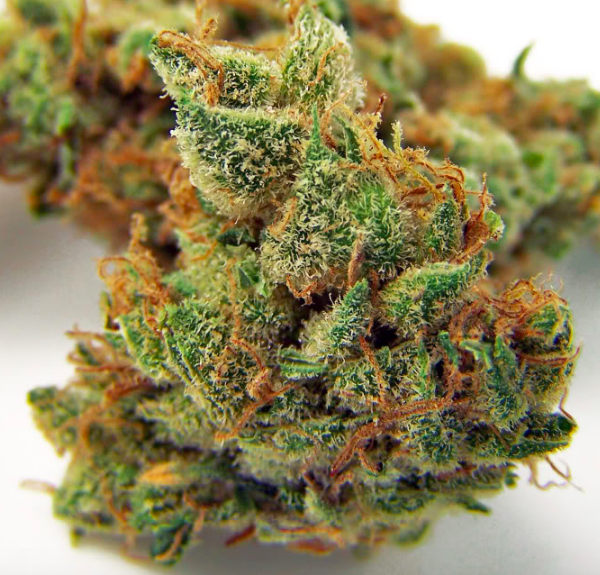 Buy-Jillybean-Boutique-Craft-Cannabis-Strain-Buds-Grown-in-BC-Canada-via-Mail-Order-1-600x575.png