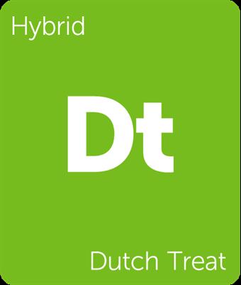 dutch treat.png