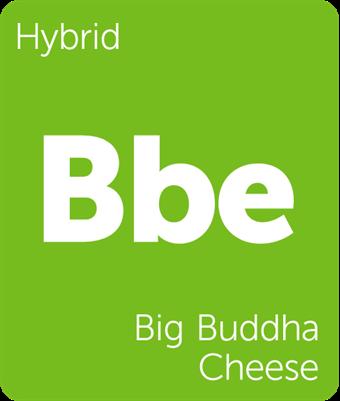bigbudd.png
