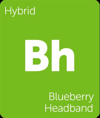 blueberryheadband.png