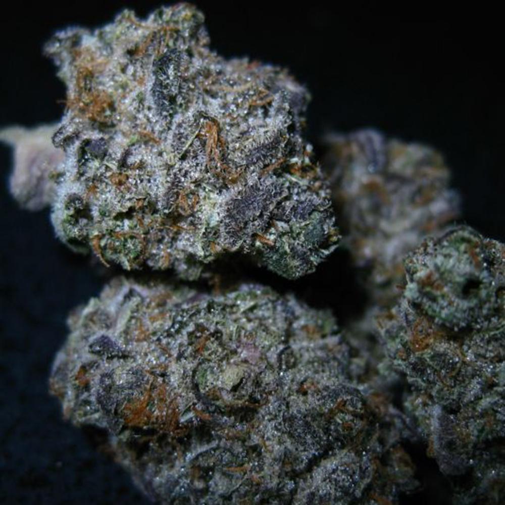cannabis-white-buffalo-1.jpg