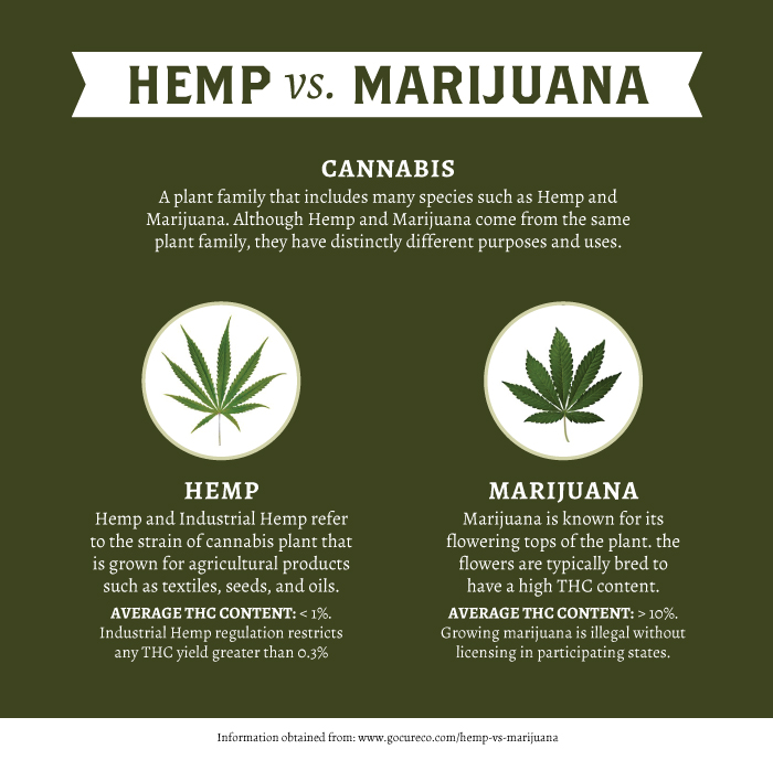 Hemp-vs-Marijuana2.jpg