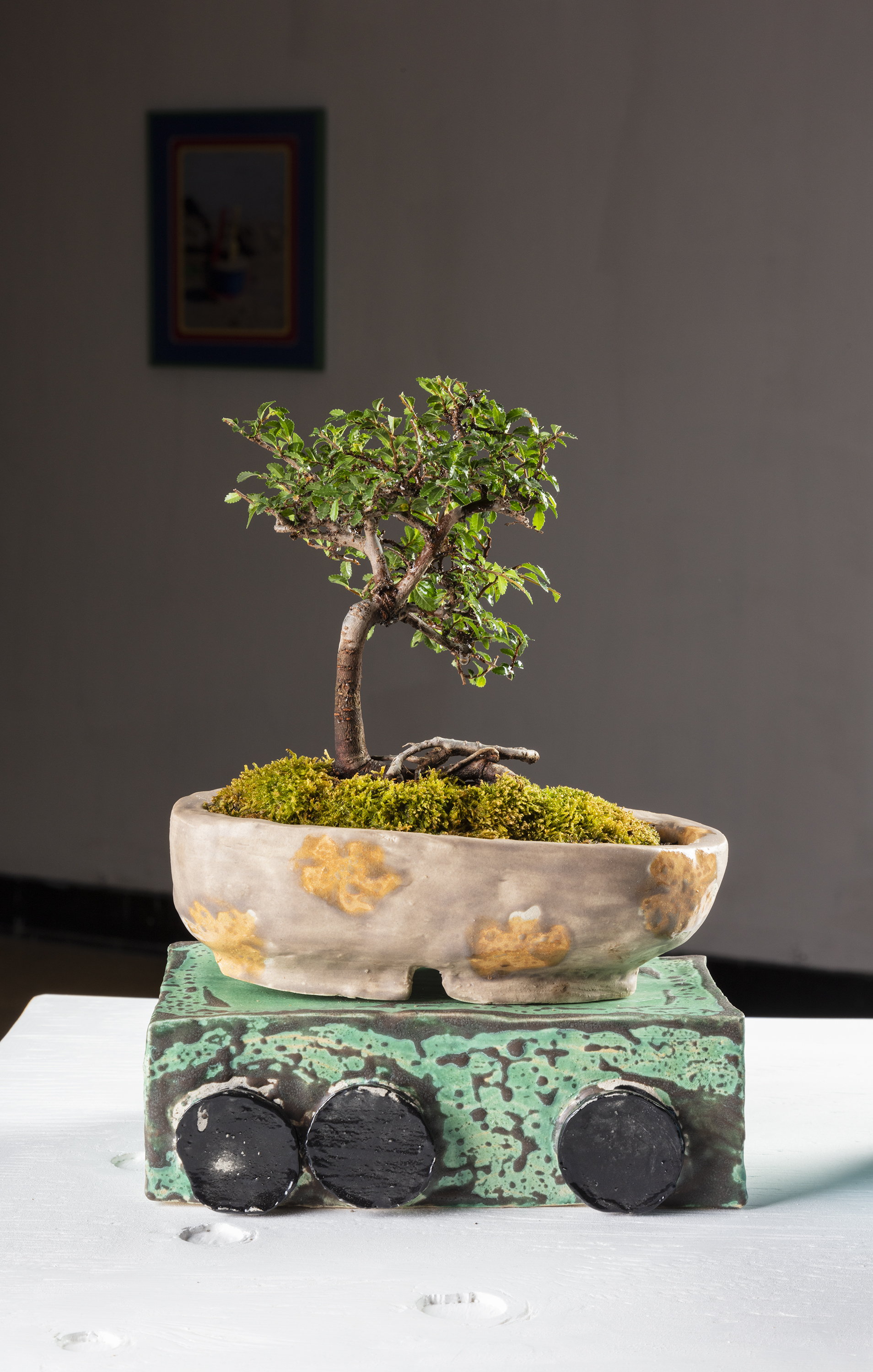 Lucinda Trask, Anais and Hideo Franco & Antoine Midant    Train of Thought , Dimensions Variable, Ceramics, Plywood and Bonsai Tree. (Detail)
