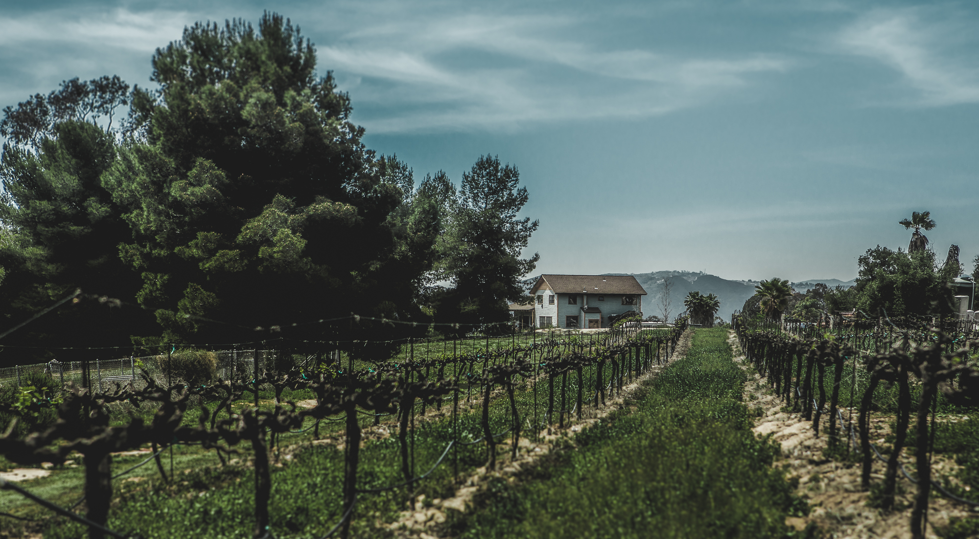vineyard in temecula, ca 4.5.18