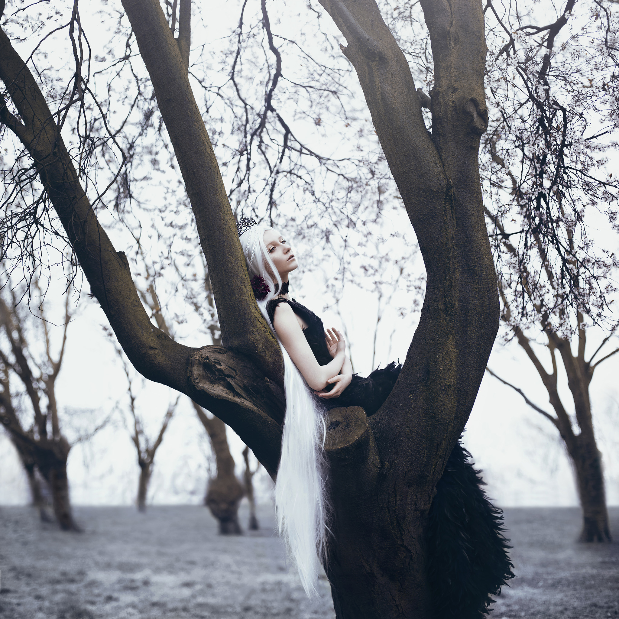 the crow queen's dream.. by  Bella Kotak