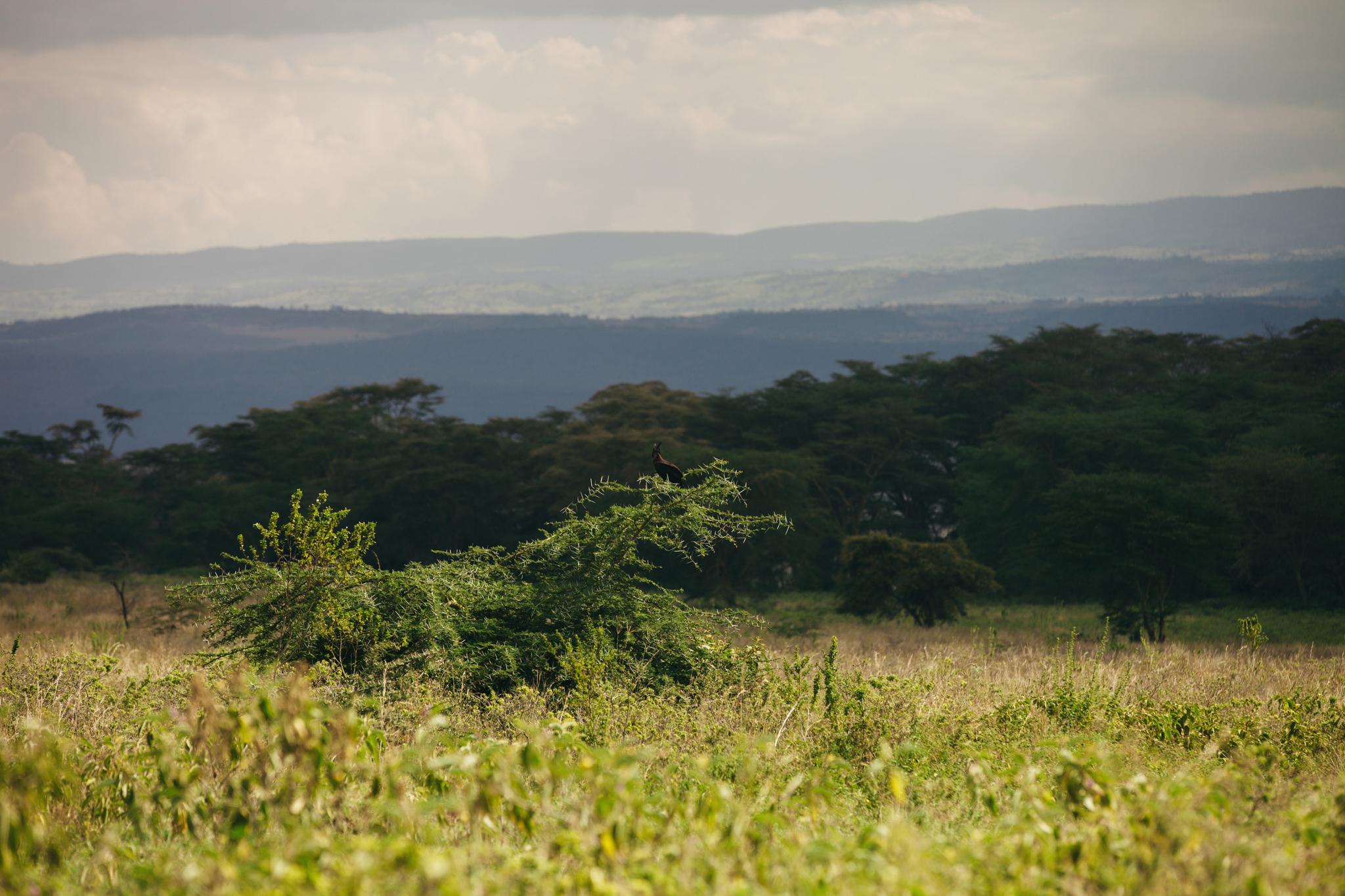 Kenya-18.jpg
