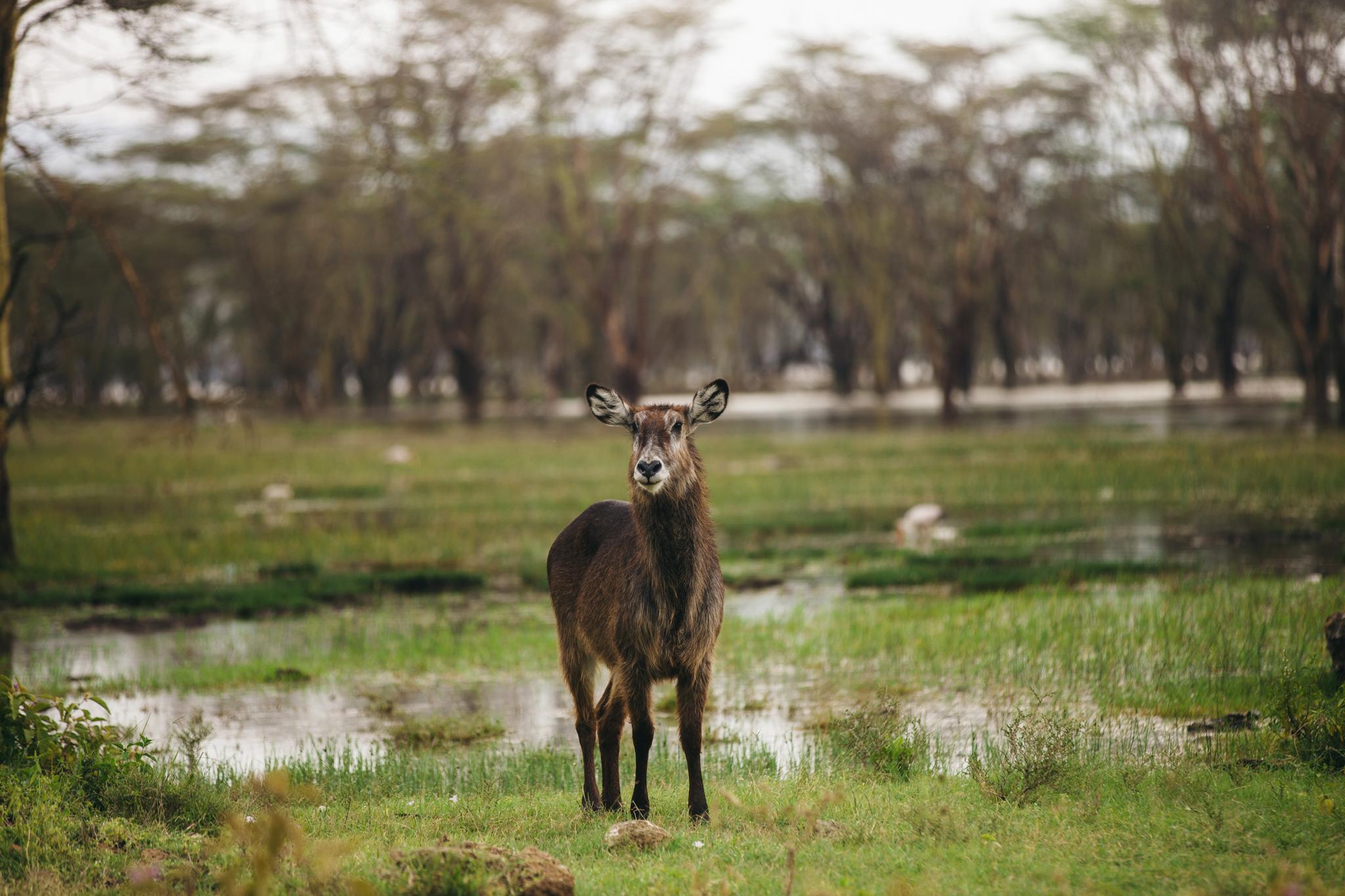 Kenya-29.jpg