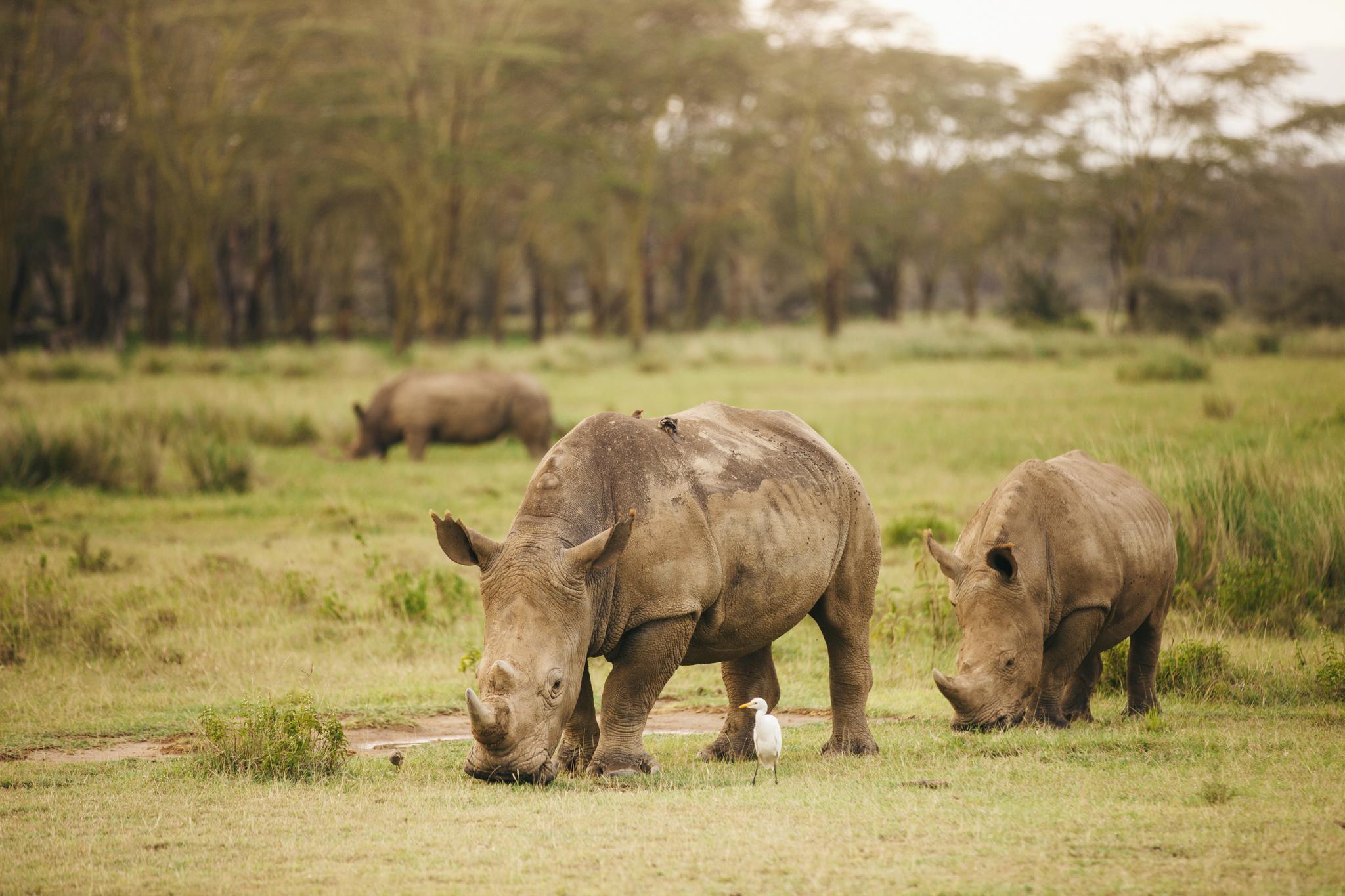 Kenya-44.jpg