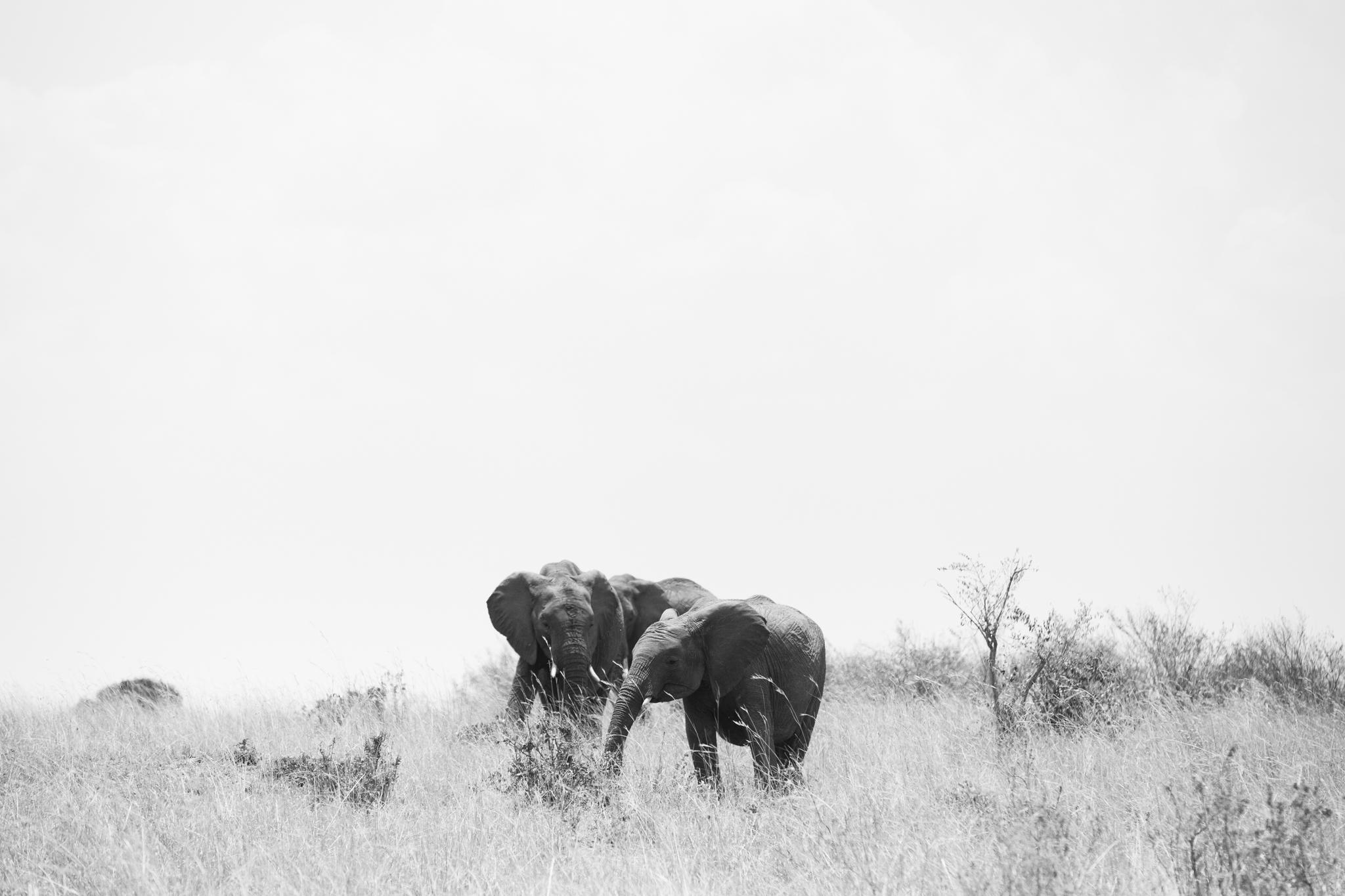 Kenya-65.jpg