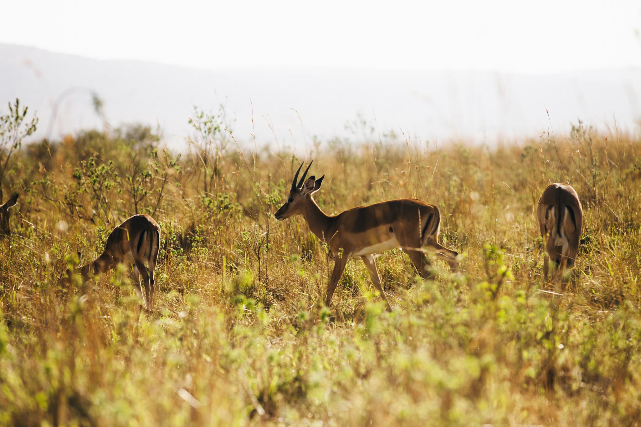 Kenya-82.jpg