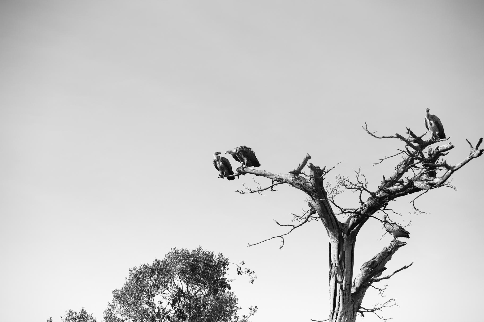 Kenya-84.jpg