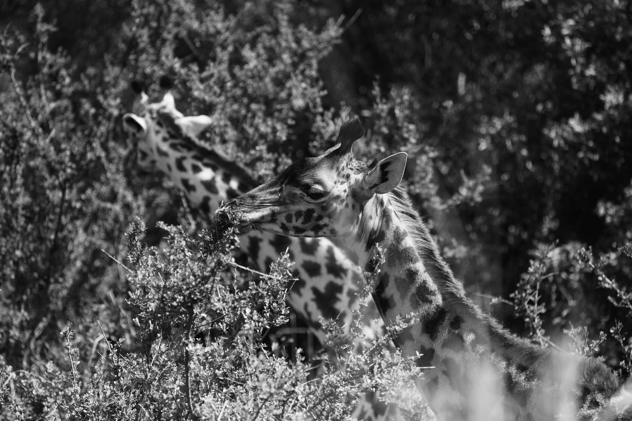 Kenya-93.jpg