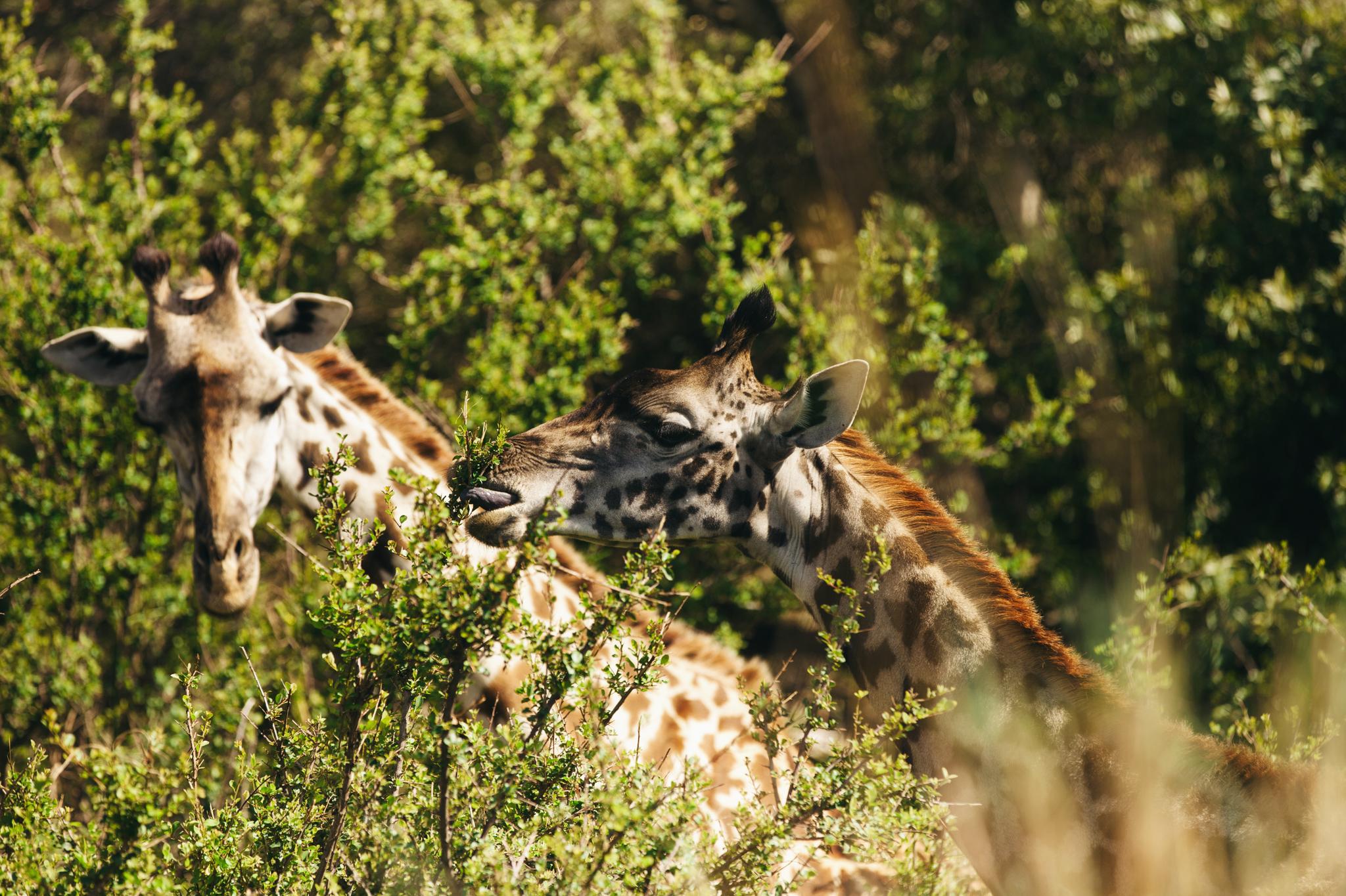 Kenya-94.jpg