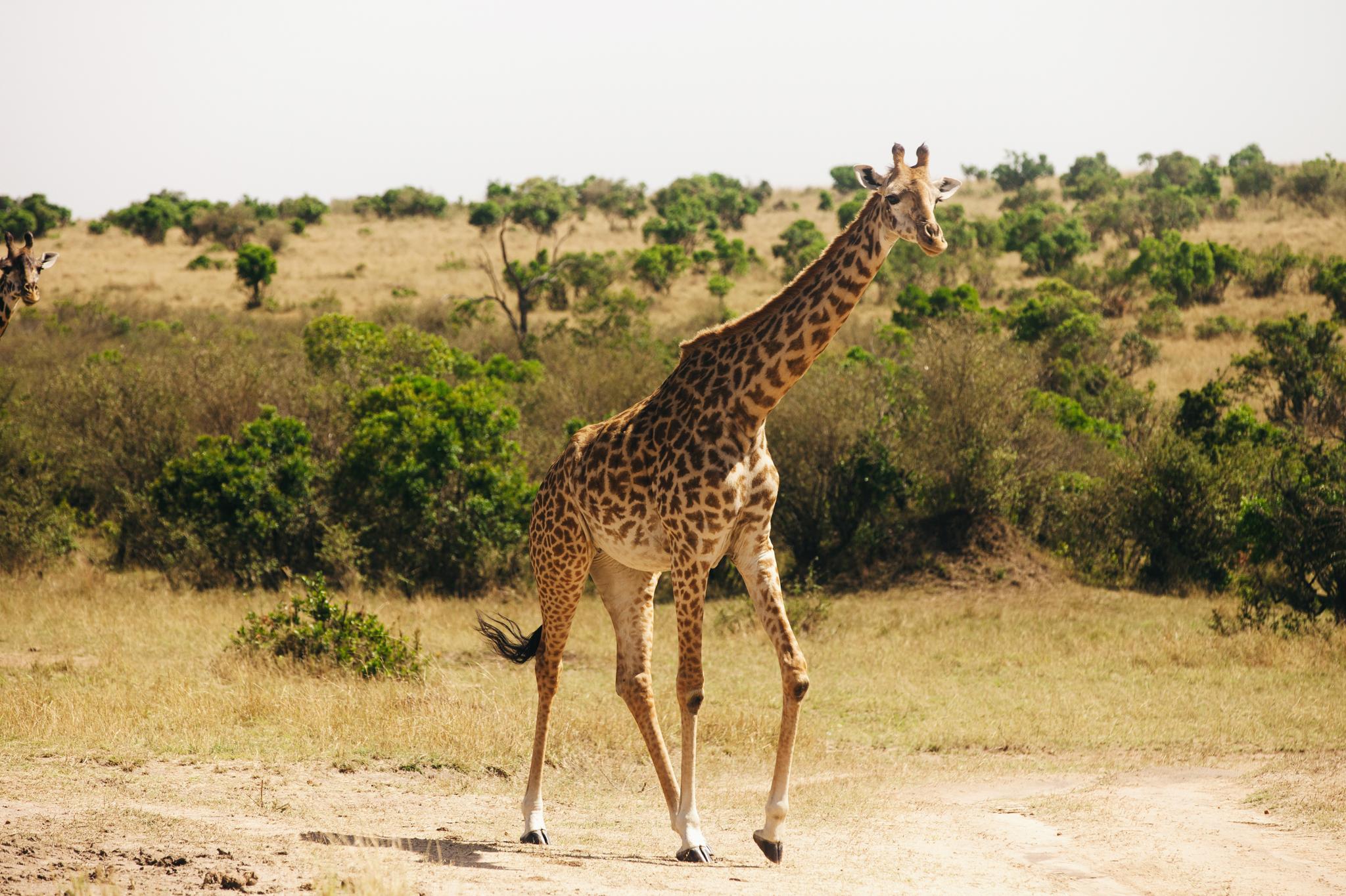 Kenya-100.jpg